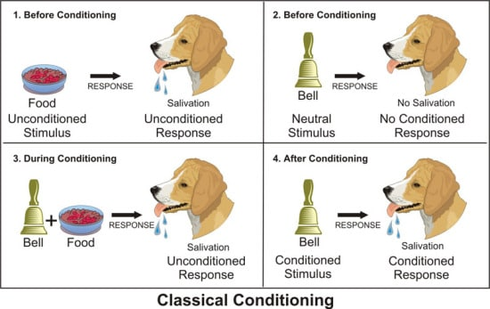 the-steps-to-ivan-pavlov-s-classical-conditioning